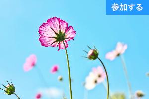 【秋の特別企画】東京の魅力を新発見『秋の婚活さんぽ』 ~東京の新・旧名所を巡りながら出会いを楽しもう!~