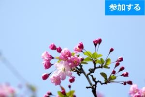 【3月イベント情報】春の鎌倉散策(鎌倉) ― 古都で季節を感じるスローな旅 ―