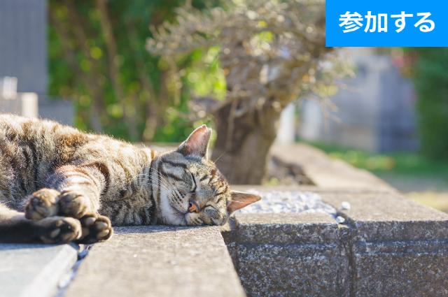 【6月イベント情報】東京さんぽ(谷根千) ―東京の名所を巡りながら出会いを楽しもう!―