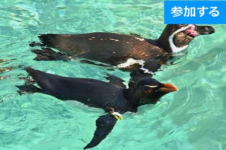 【7月イベント情報】水族館に出かけよう!(葛西臨海水族館) ―水辺の生き物鑑賞&触れ合い体験!―