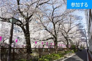 【4月イベント情報】 春の東京散策(目黒川)  ― 東京の名所を巡りながら出会いを楽しもう! ―