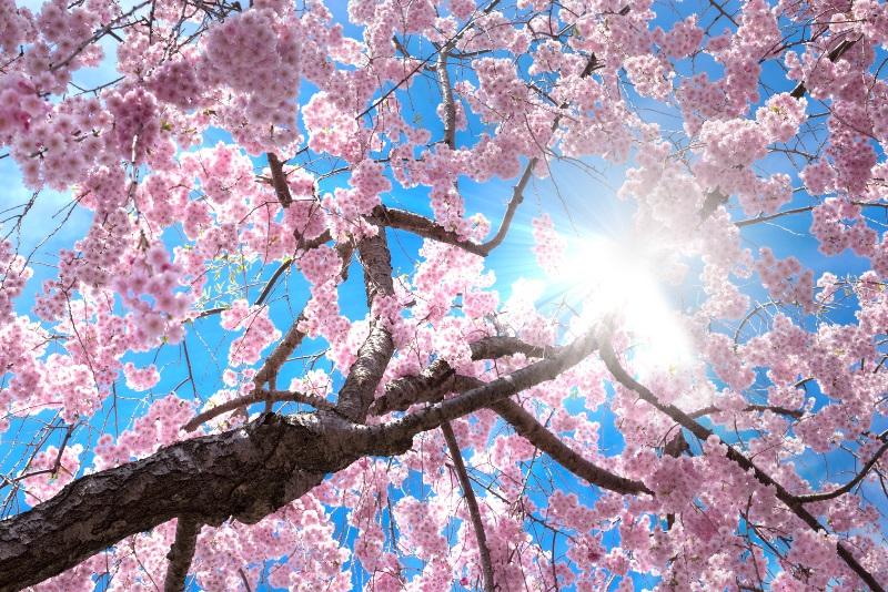 「春の婚活応援キャンペーン・第2弾」 ― 募集開始のお知らせ〈20代30代限定で4月30日迄!〉―