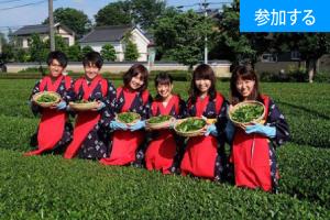【6月イベント情報】お茶摘み体験を楽しもう!(埼玉・狭山)  ― 緑まぶしい茶畑で自然の恵み満喫 ―