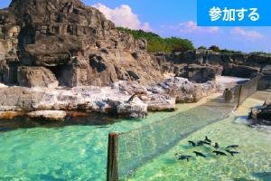 【7月イベント情報】水族館へ行こう!(葛西臨海水族館) ― 水辺の生き物鑑賞&触れ合い体験! ―