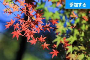 【11月イベント情報】秋の鎌倉散策(北鎌倉) ― 古都で季節を感じるスローな旅 ―