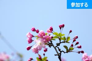 【3月イベント情報】春の鎌倉散策(鎌倉・長谷) ― 古都で季節を感じるスローな旅 ―