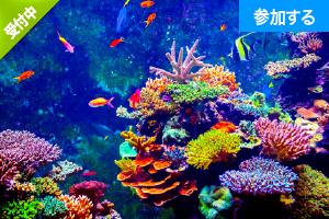 【7月イベント情報】水族館へ出かけよう!(葛西臨海水族館) ― 水辺の生き物鑑賞&触れ合い体験! ―