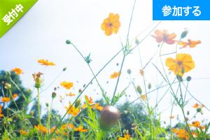 【9月イベント情報】ガイドと行く!深川・門前仲町さんぽ ― 歴史と自然を感じながら江戸名所めぐりを楽しもう! ―